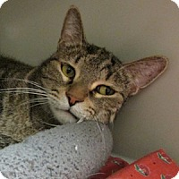 Adopt A Pet :: Pokie - Gilbert, AZ
