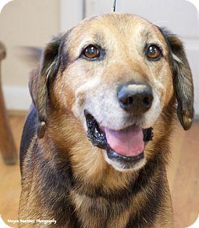 Shepherd (Unknown Type)/Hound (Unknown Type) Mix Dog for adoption in Homewood, Alabama - Eli