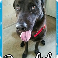 Adopt A Pet :: Bandit - Edwards AFB, CA