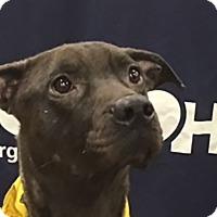 Adopt A Pet :: Wolfie - Bowie, MD