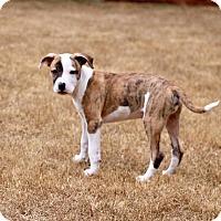 Adopt A Pet :: Blaze - Atlanta, GA