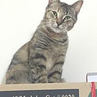 Adopt A Pet :: Penny - Albany, NY