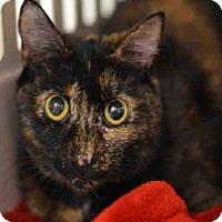 Adopt A Pet :: Shiva - Norwich, NY