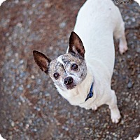 Adopt A Pet :: Tia Chi - Seattle c/o Kingston 98346/ Washington State, WA