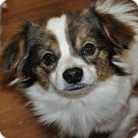 Adopt A Pet :: Jethro - Prosser, WA
