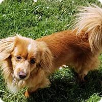 Adopt A Pet :: Abner - Antioch, CA