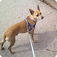 Adopt A Pet :: Devin - Sacramento, CA