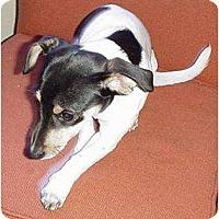 Adopt A Pet :: FeFe - Glastonbury, CT