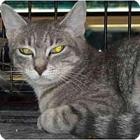 Adopt A Pet :: Nina - Riverside, RI