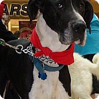 Adopt A Pet :: Kaine   *Adopted - Tulsa, OK