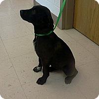 Adopt A Pet :: Mandy - Jacksboro, TN