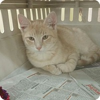 Adopt A Pet :: Solo - Troy, OH