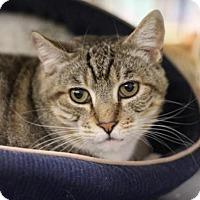Adopt A Pet :: Bob - Sacramento, CA
