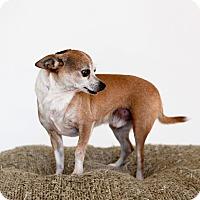 Adopt A Pet :: Badger-No Adoption Fee! - Scottsdale, AZ