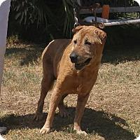 Adopt A Pet :: Daphne - pending - Mira Loma, CA
