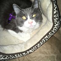 Adopt A Pet :: Extra Gorgeous - Los Angeles, CA