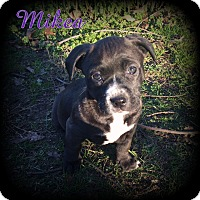 Adopt A Pet :: Mikea - Denver, NC