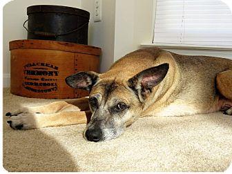 Shepherd (Unknown Type) Mix Dog for adoption in Fredericksburg, Virginia - Daisy