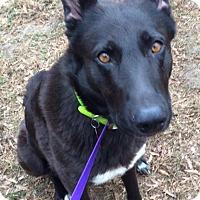 Adopt A Pet :: Berkeley - Memphis, TN