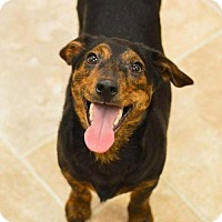 Adopt A Pet :: Domino - Pardeeville, WI