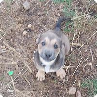 Adopt A Pet :: Betsy - Burlington, VT