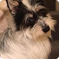 Adopt A Pet :: Jax - Hedgesville, WV