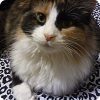 Adopt A Pet :: Calico - Warren, MI