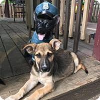 Adopt A Pet :: Meggan - Marlton, NJ