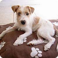 Adopt A Pet :: Niles - Houston, TX