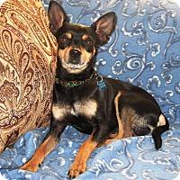 Adopt A Pet :: Maverick - Osseo, MN