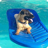 Adopt A Pet :: Jonas - Scottsdale, AZ