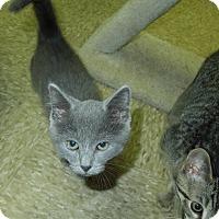 Adopt A Pet :: Myrrh - Medina, OH
