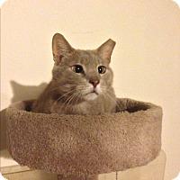 Adopt A Pet :: Decker - Roswell, GA