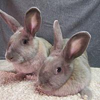 Adopt A Pet :: Cassidy & Cheyenne - Newport, DE