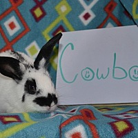Adopt A Pet :: Cowboy - Erie, PA