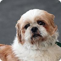 Adopt A Pet :: Gage - Palmdale, CA