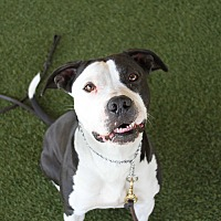 Adopt A Pet :: Kimchi - Odessa, FL