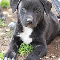 Adopt A Pet :: Rodney - Westport, CT