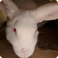 Adopt A Pet :: Maximus - Maple Shade, NJ