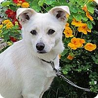 Adopt A Pet :: LACIE - Humboldt, TN