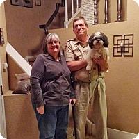 Adopt A Pet :: Sy - Sacramento, CA