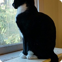 Adopt A Pet :: Rosemary - Morganton, NC