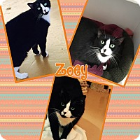 Adopt A Pet :: Zoey - Goshen, NY