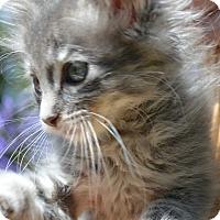 Adopt A Pet :: Dorrie - Stanford, CA