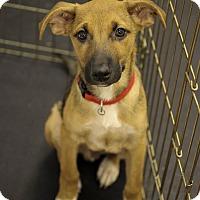 Adopt A Pet :: Eddie - Jupiter, FL