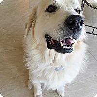 Adopt A Pet :: Fantasia  *Adopted - Tulsa, OK