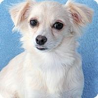 Adopt A Pet :: Bel Air - Encinitas, CA