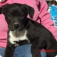 Adopt A Pet :: Flicka (10 lb) Video! - Sussex, NJ