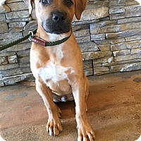 Adopt A Pet :: Lonzo - Waldorf, MD