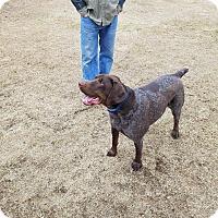 Adopt A Pet :: Trigger - Alma, WI